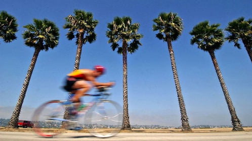 Bicyclist on beachfront with Palm trees