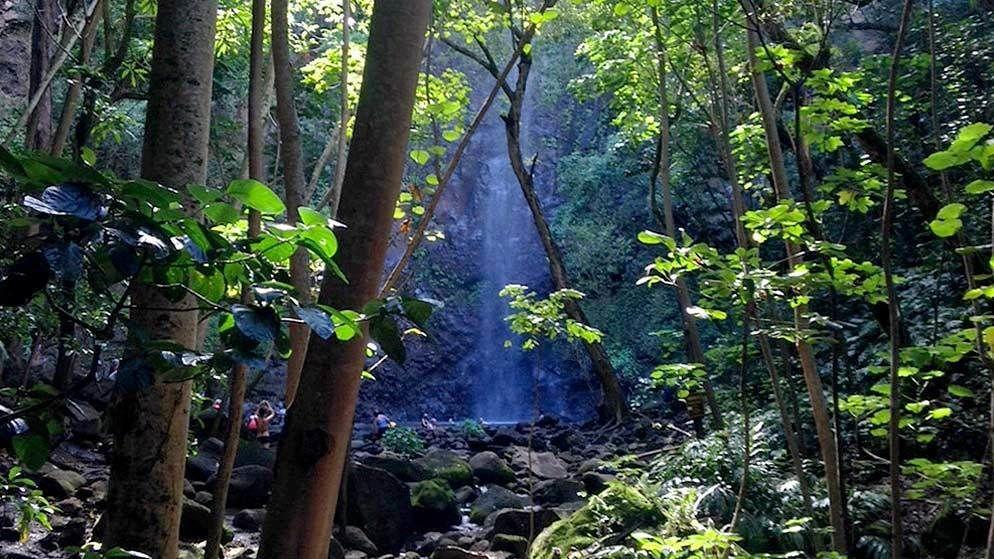 View through the trees of waterfalls in Kauai