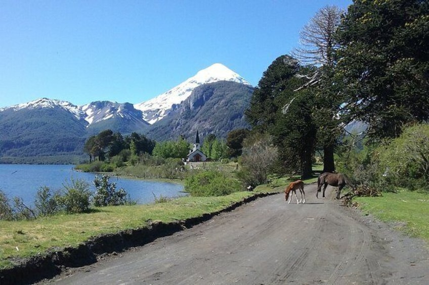 Show item 1 of 4. Tour of the Lanin Volcano and Huechulafquen Lake