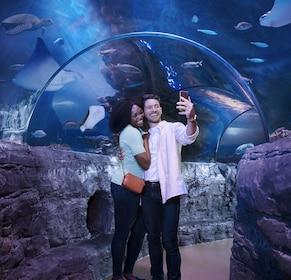 Merlin's Magical London Pass: 5 Attractions inc. London Eye, Madame Tussauds & SEA LIFE