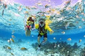 Maafushi: Half day snorkelling, Dolphin watching and Sandbank trip