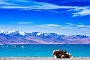 6-Day Small Group Lhasa City and Holy Lake Namtso Tour from Suzhou