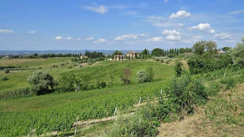 Countryside in Florence