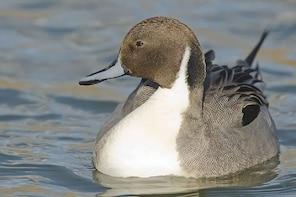 La Mancha Wetland Bird Watching