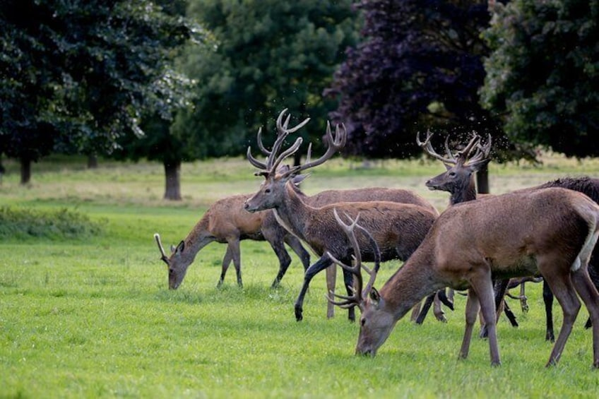 Show item 3 of 11. Wollaton Hall with deer.
