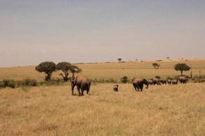3-Day Maasai Mara National Reserve Safari Tour from Kisumu