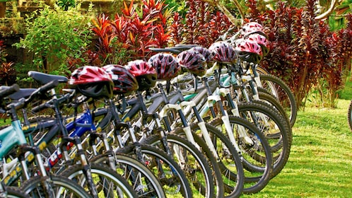 neat row of bicycles and helmets in Bali