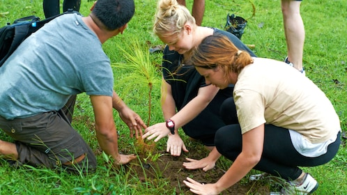 village visitors help planting a tree in Bali