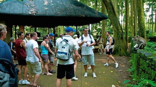 group interacting with a village monkey in Bali