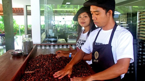 Workers smoothing out roasted cocoa seeds