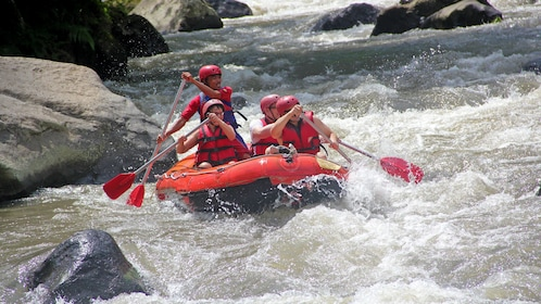 White water rafting group paddling in the rapids in Bali