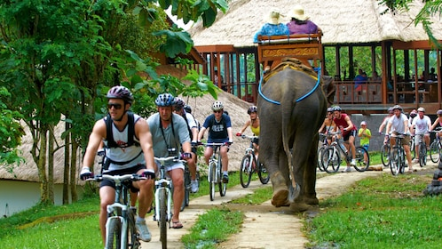 Bicycling group shares a trail with an elephant in Bali