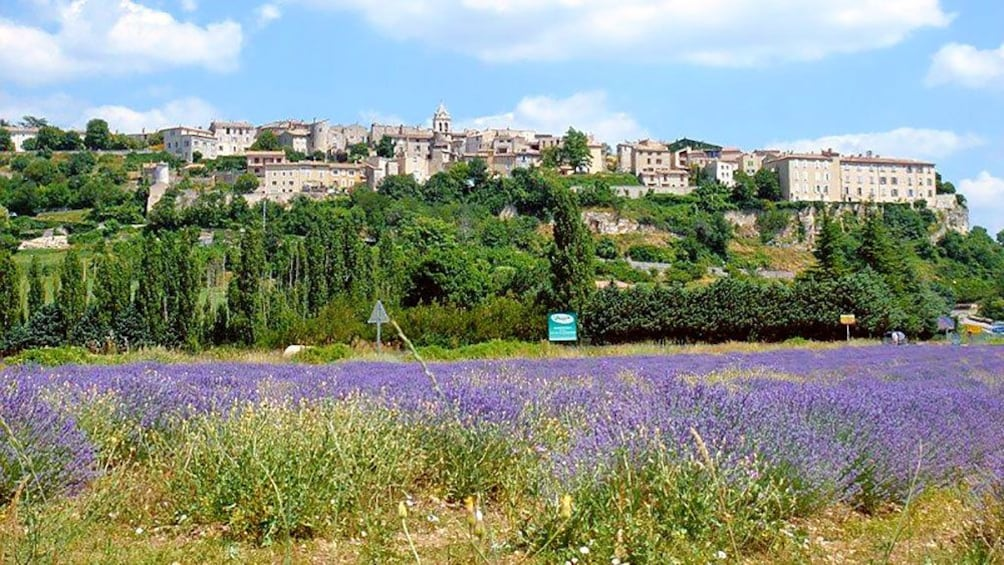 Charger l'élément 4 sur 5. a field of lavender on the outskirts of the town in Provence