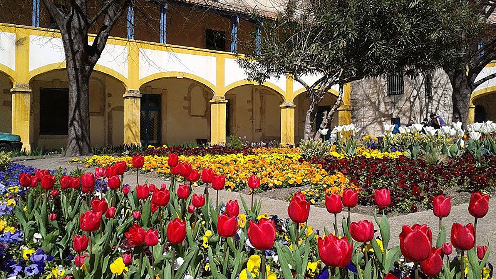 vibrant tulips inside a garden in Provence