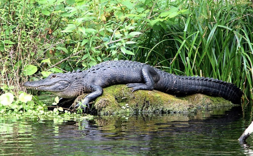 Private Jeep Tour and Airboat Adventure in the Everglades
