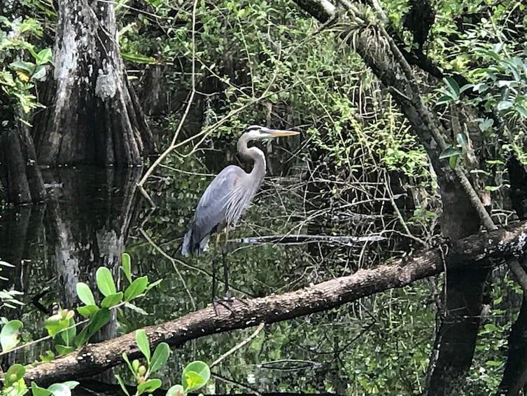 Apri foto 3 di 9. Private Jeep Tour and Airboat Adventure in the Everglades