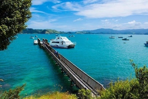 Cruise to The Coromandel from Auckland - One Way