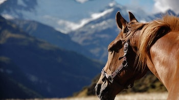 Horseback riding and wine From Santiago