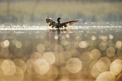 Rio Grande Artist Nature Wandering Adventure