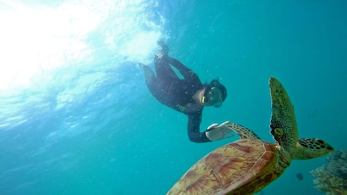 diver swimming with a sea turtle in Australia