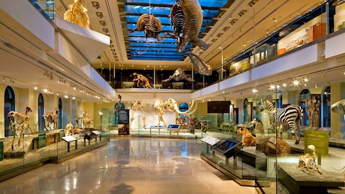 prehistoric animal fossils on display at the Natural History Museum in Los Angeles