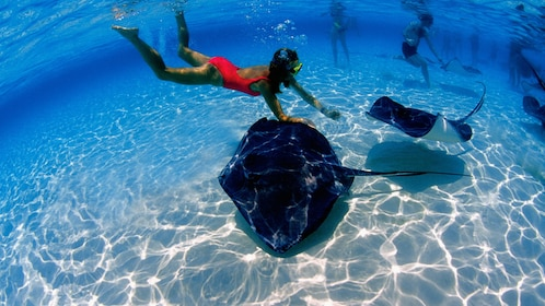 Snorkeling with stingrays in Grand Cayman