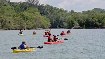 Pulau Ubin Mangrove Kayak Adventure