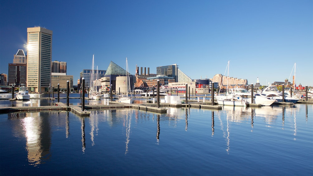 Show item 4 of 5. View of the marina and city in Baltimore