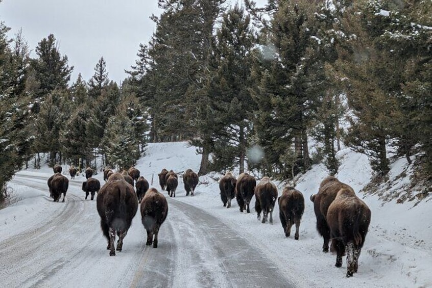 Show item 3 of 30. Yellowstone Winter Private Jeep Tour from Bozeman