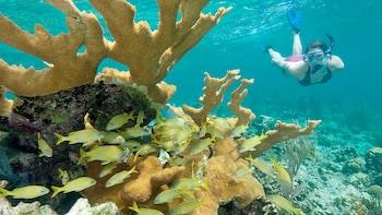 Henley Cay Kayak & Snorkel Adventure
