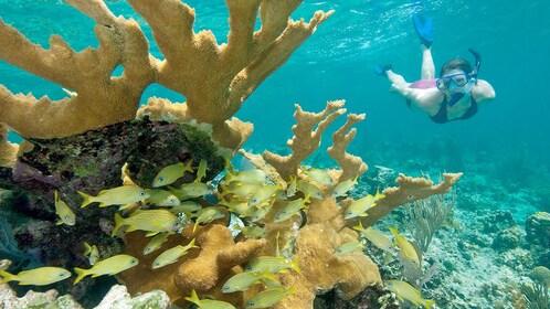 Snorkeler in the Caribbean