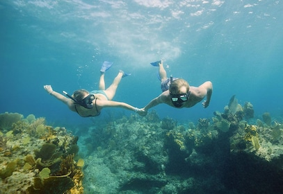 Half-Day Snorkeling & Conch Cruise with Beach Picnic