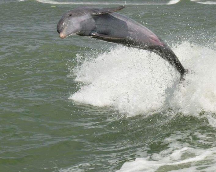Show item 2 of 8. Dolphin Racer Speedboat Adventure