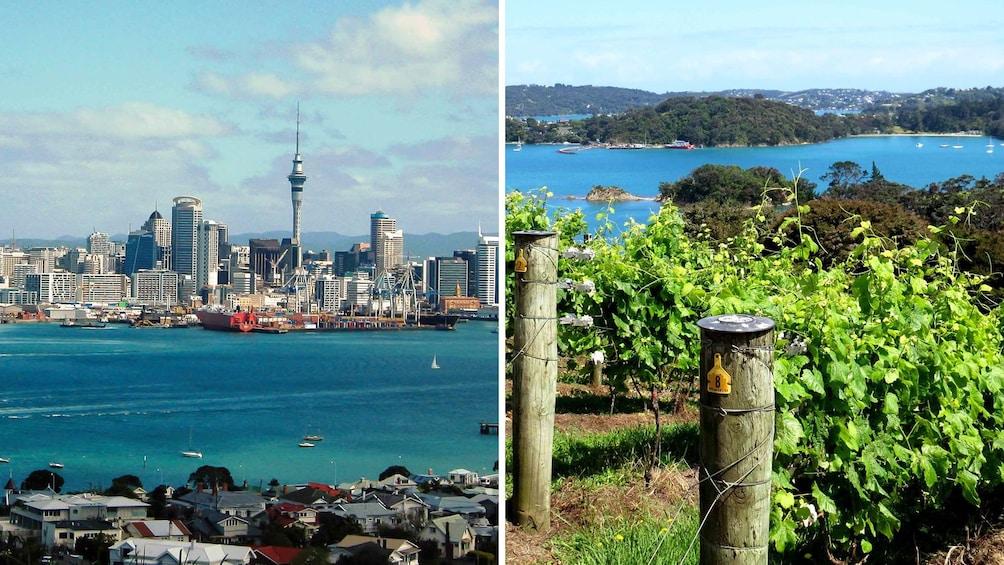 Combo image of City Highlights and Waiheke Island Wine Tour