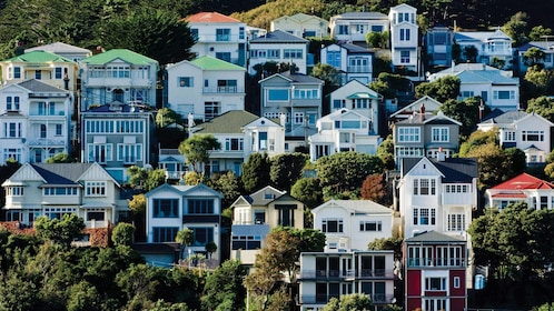 hillside of houses in new zealand