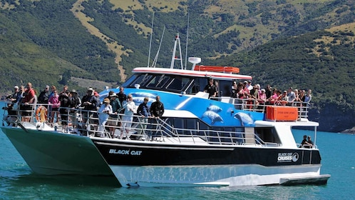 small cruise boat in new zealand