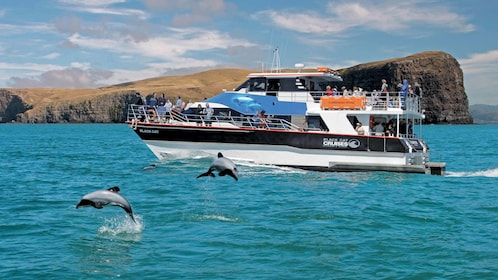 small cruise boat with dolphins in new zealand