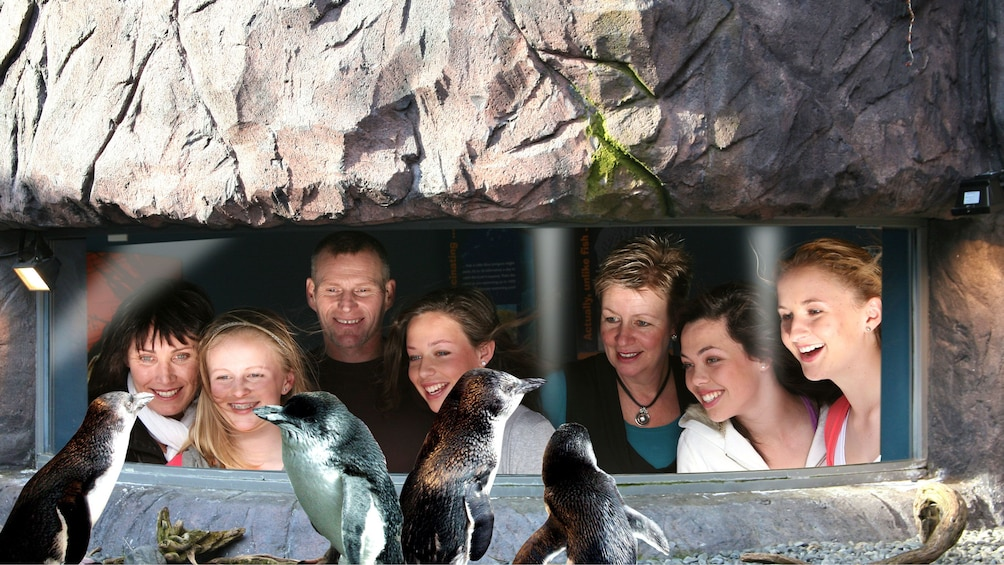Show item 5 of 5. Penguins at the Antarctic Center in Christchurch