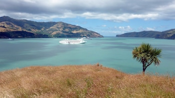 Akaroa Cruise Excursion – Christchurch City Sightseeing & Farm Tour