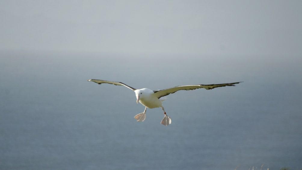 Bird seen flying on the Otago Wildlife Cruise in New Zealand