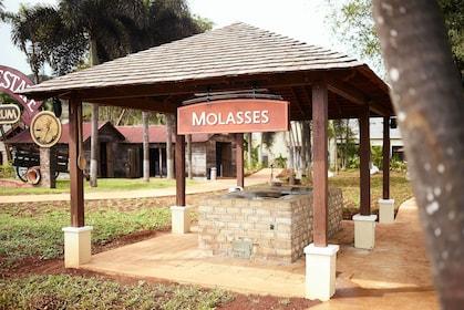 Molasses at the Appleton Estate Rum Factory Tour