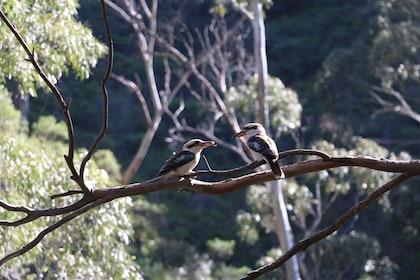 Cleland Wildlife Park Excursion including Mount Lofty Summit