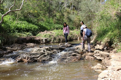 Half-Day Hiking Tour in Morialta Conservation Park