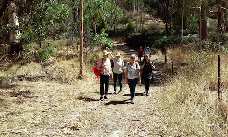 Half-Day Eco Hiking Tour - Morialta Wilderness and Wildlife