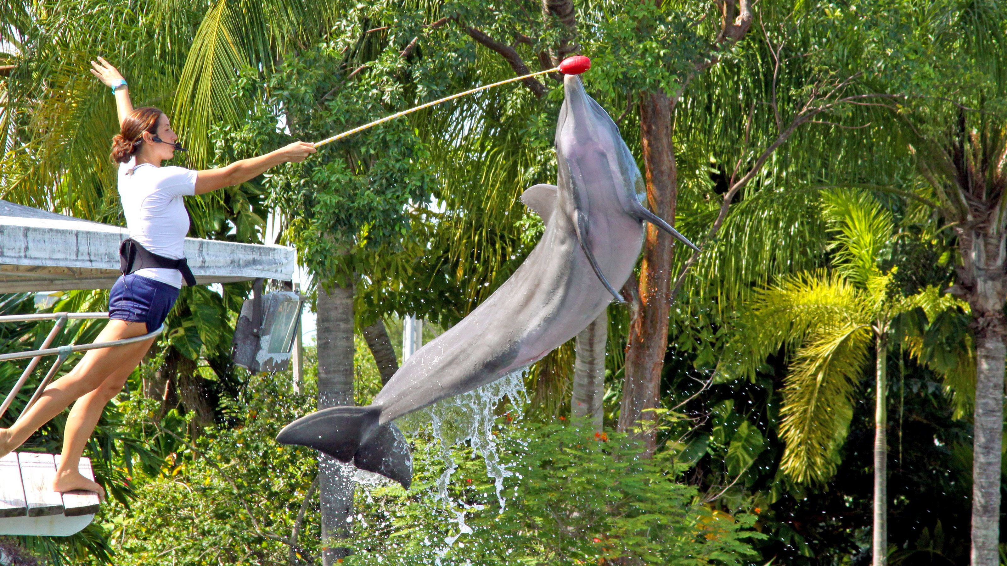 Dolphin at the Theater of the Sea in Islamorada, Florida