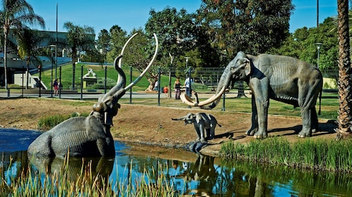 Elephants at the La Brea Tar Pits Museum in Los Angeles
