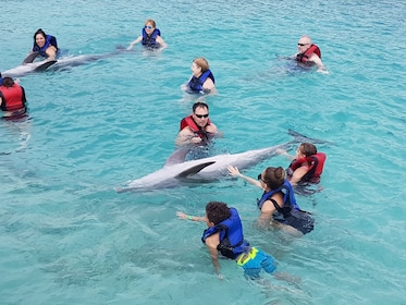 Group swim with dolphins.jpg