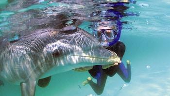 Svømming med delfiner og strandtur