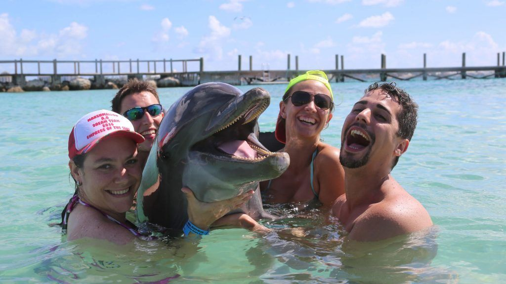 Dolphin Encounter & Beach Break