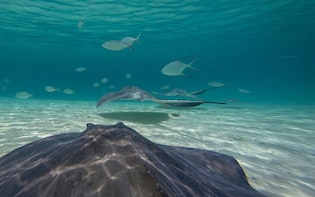 Stingray Encounter & Beach Break